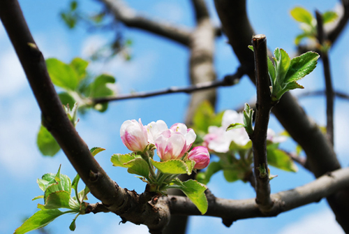 Blüte Himmel Frühling Gardasee